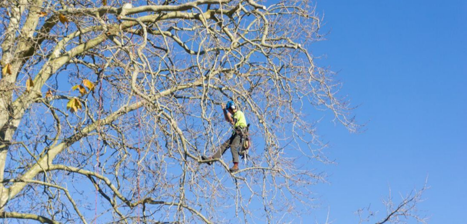 Climber from Emondage Sherbrooke working in a tree in Sherbrooke.