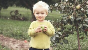 A child tastes an apple freshly picked from an apple tree on his parents' property in Sherbrooke.